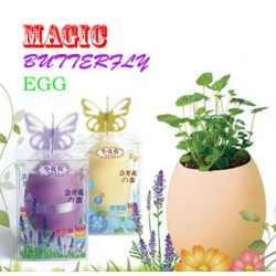 Magic Buttefly Egg