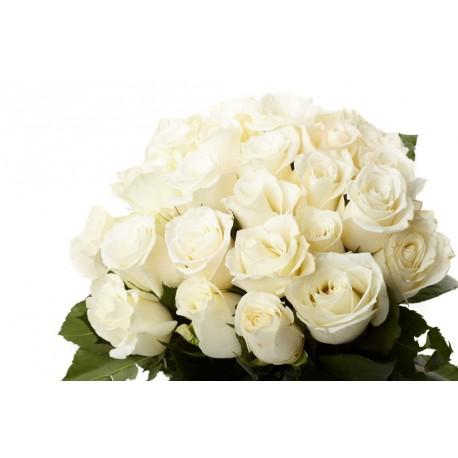 21 Trandafiri albi