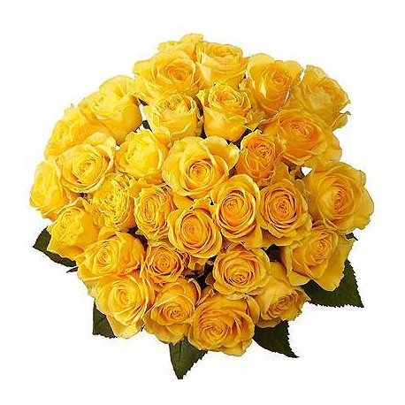 31 Trandafiri galbeni