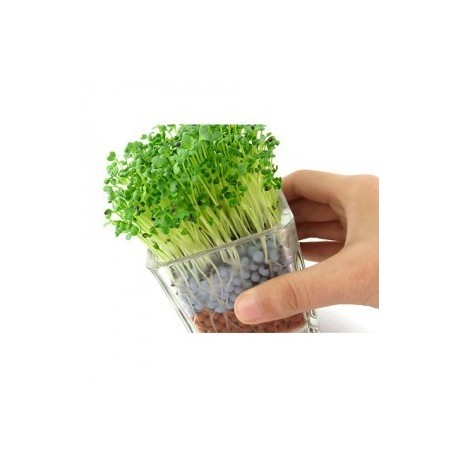 "Vazon sticla ""Happy Plant"""